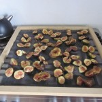 fig drying