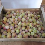 mirabelles for teo