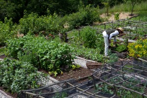 The potager – growing vegetables the rural French way