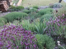 The barn garden – more gardening on a slope