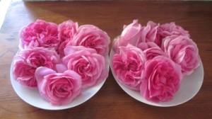 recipe 6 roses 1