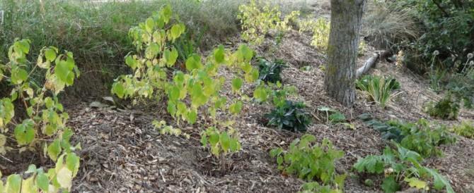 The walnut bank – a woodland garden design