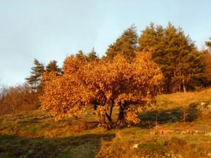1oak bank oak