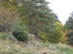 2014 pine