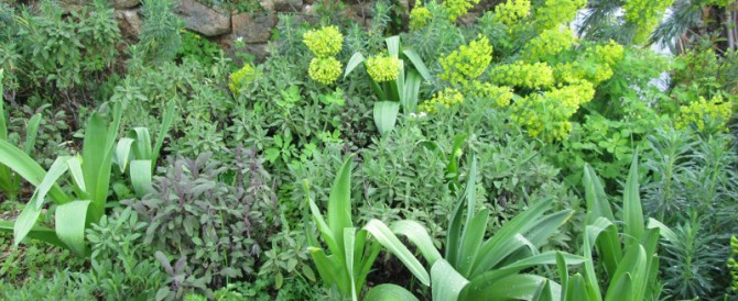 The herb garden – aiming for practical and pleasing