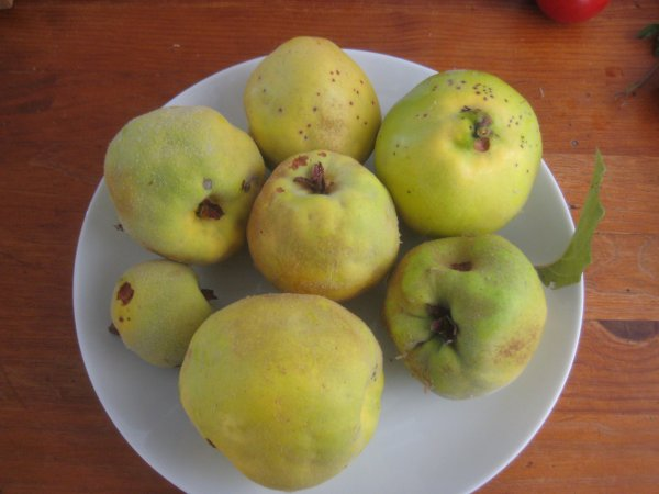 First quinces