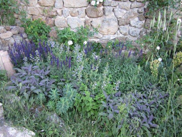 herb garden 2011