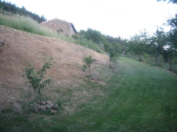 mown orchard