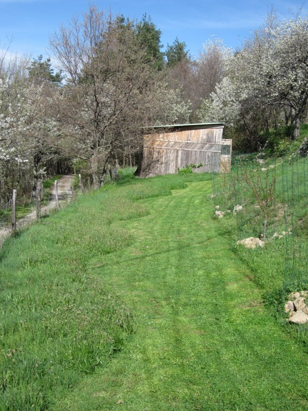 orchard second mow long view