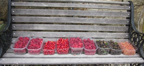 The soft fruit orchard – the food factory