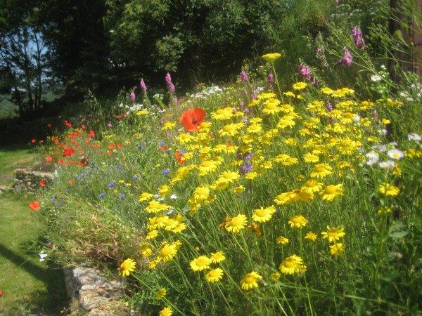 wildflowers 2010