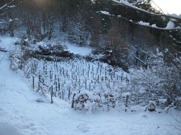 12 vineyard under snow
