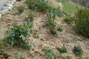 The winter mulch for the garden