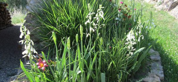 The walnut path – creating interest along a grassy path