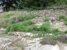 The lawn bank – grasses to the rescue