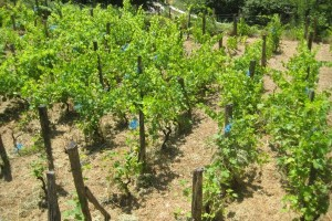 The vineyard – farming for fanatics