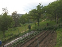 The top potager – yet another vegetable garden