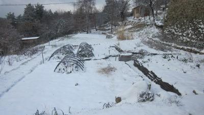 potager under snow