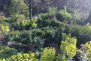 The shade garden – learning from garden design mistakes