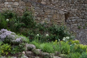 Replacing thyme plants for a coherent garden design