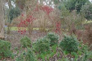 Winter visit to Wisley Gardens