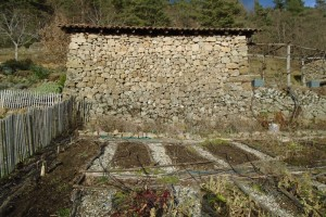 Preparing the potager for spring