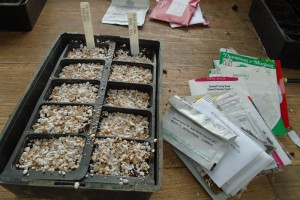 Seed sowing in the potting shed