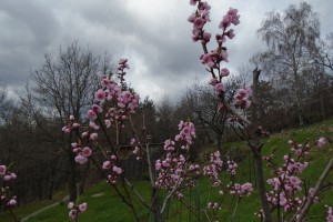 Spring work in the orchard