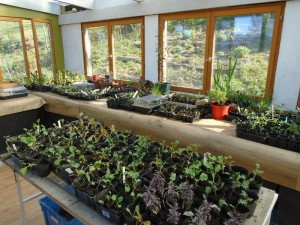 1potting shed crops