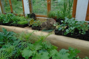 Pests in the potting shed
