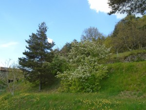1quince bank
