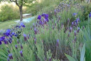 Weeding the barn garden path