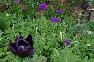 Colour in the garden