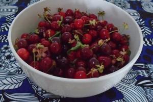 First cherries of the season