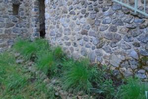 Weeding the step garden