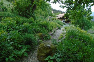 Shade garden pruning