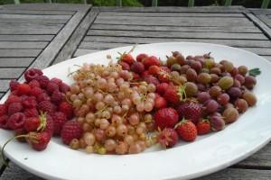 First soft fruit harvest