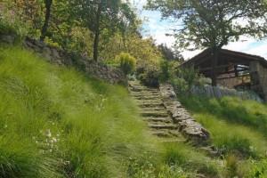 Eragrostis grasses in spring