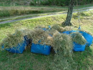 collected grass