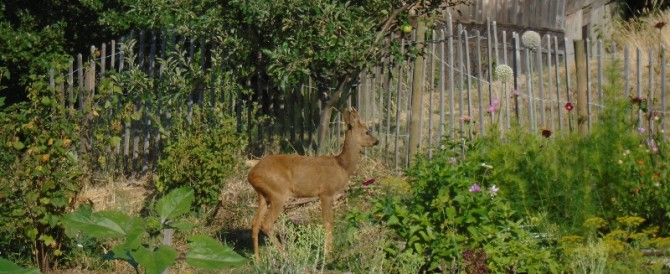 Unwanted wildlife in the potager