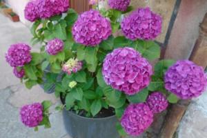 Shade garden flowers