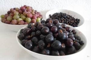 Jostaberry harvesting