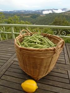 beans basket
