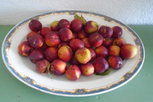 Stone fruit in late summer