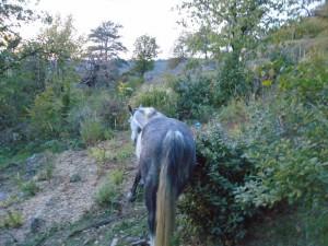 ulysse testing hedge