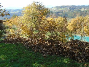 hedge rakings