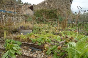 Putting the potager to bed