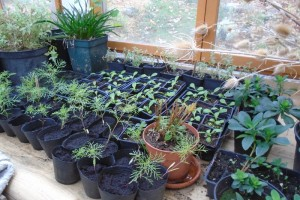 Potting shed plants