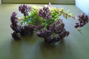 Drying sedum flowers