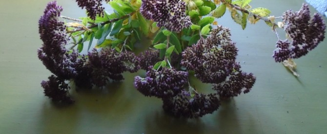 Drying sedum flowers